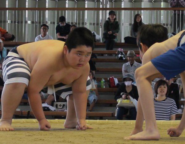 2017年度 わんぱく相撲堺大会